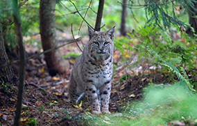 Managing Special Provisions in Wilderness: Wildlife