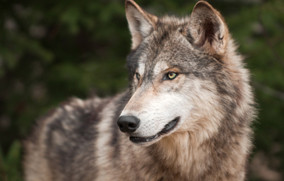 Natural Resource Management in Wilderness: Threatened & Endangered Species