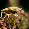 Managing Special Provisions in Wilderness: Insects and Disease