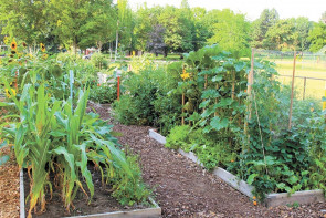 Creating a Community Through Gardening
