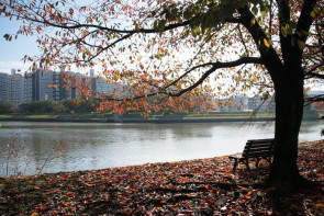 The Role of Parks and Recreation in Mental Health and Wellness