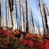 Natural Resource Management in Wilderness: Challenges In Natural Resource Restoration