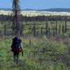 Natural Resource Management in Wilderness: Vegetation